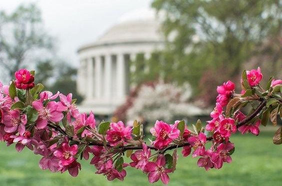 Photos: People Snap Stunning Pics Of The Cherry Blossoms: DCist