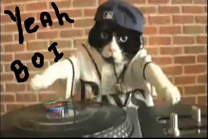 cat rapper- capper.