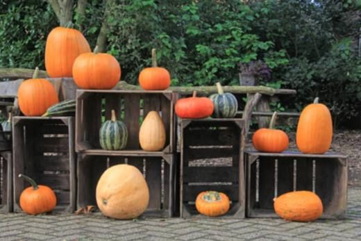 Decoration, Halloween and Deco on Pinterest
