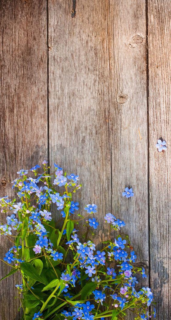 butter spring blue wallpaper - photo #17