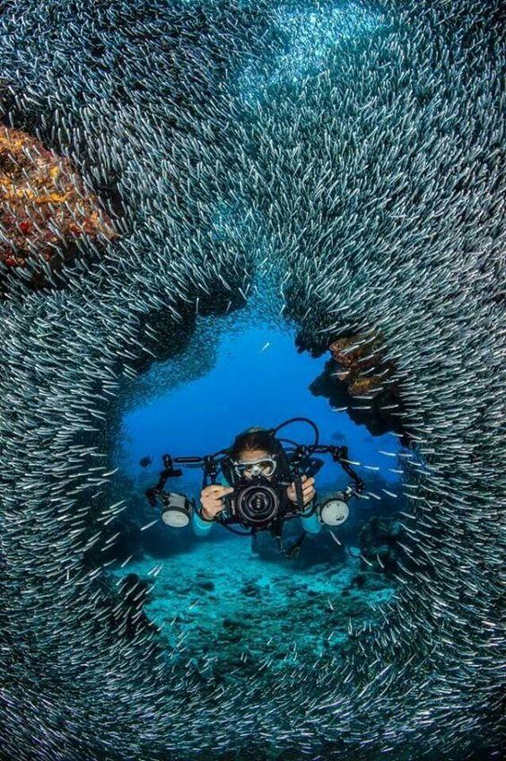 //Devil's Grotto: Cayman Islands #sea life #ocean