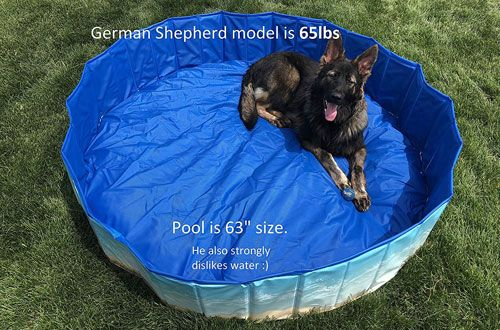Top 10 Best Portable Dog Pools Dog Pool Dogs Pool
