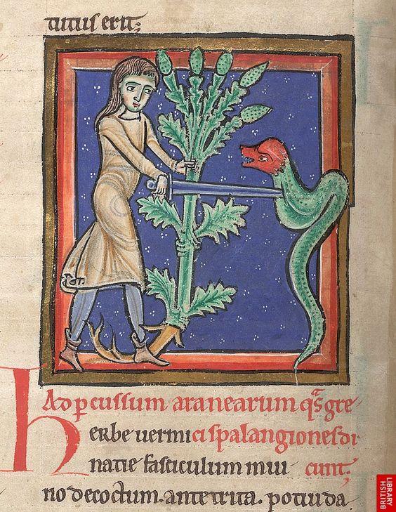 Medieval Bestiary : Snake Gallery