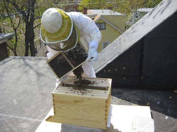 installing a package of roof top bees