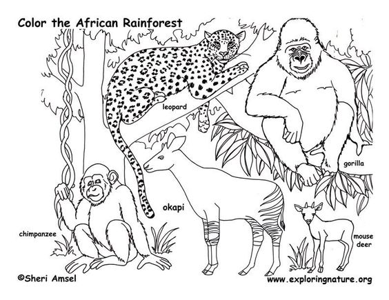 african rainforest animals coloring page - Pictures Of Rainforest Animals To Color