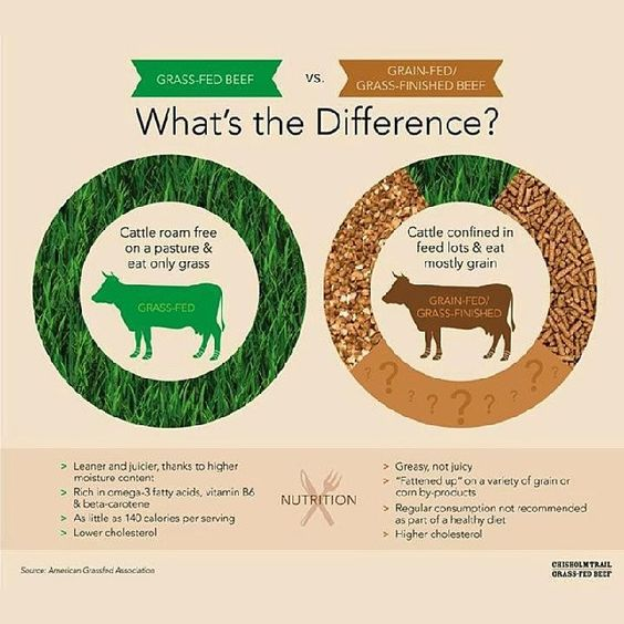Grass Fed Beef vs Grain Fed Beef