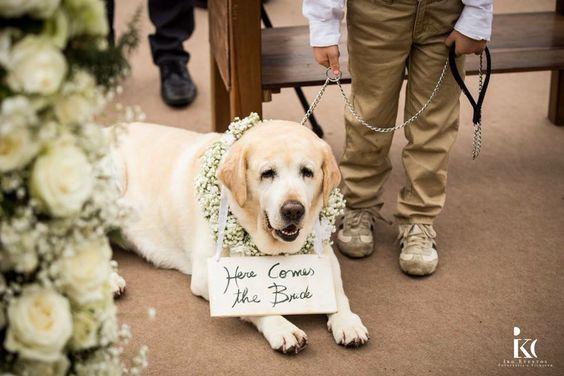 Casamento com essa fofura!  @callaeventos