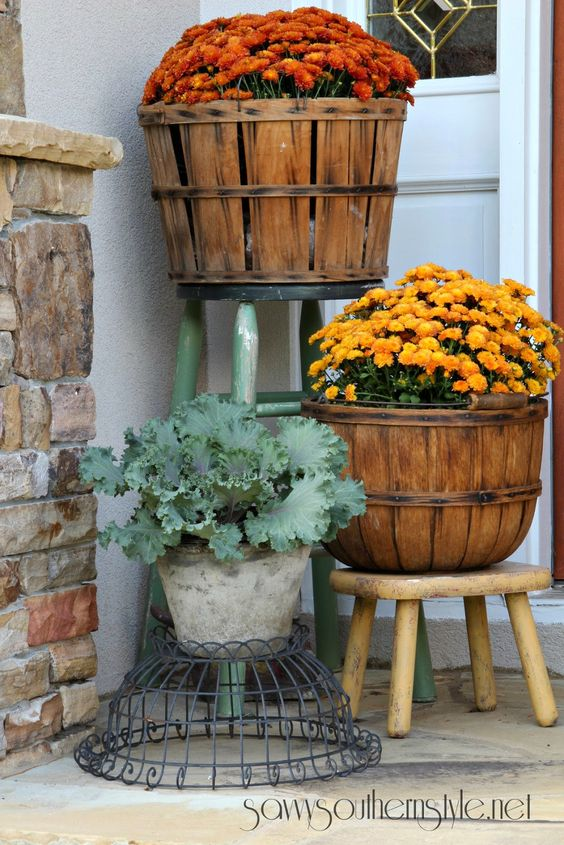 Savvy Southern Style: Classic mums in fall harvest baskets and decorative cabbages.: