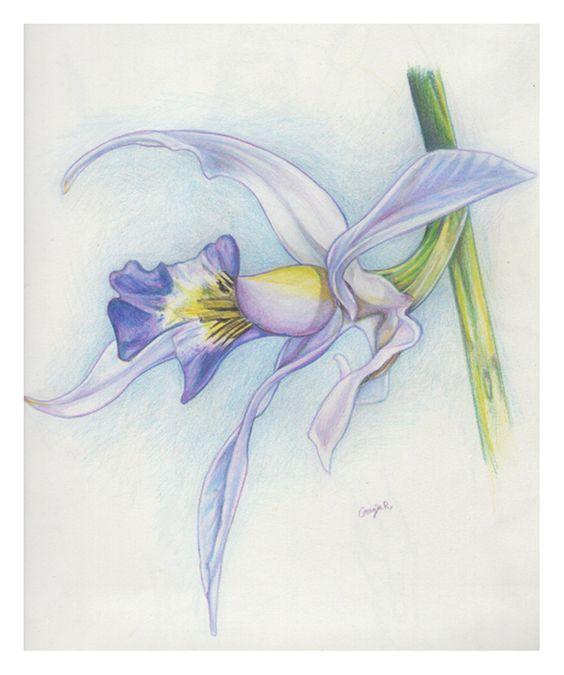 orchid, con Lapiz de color