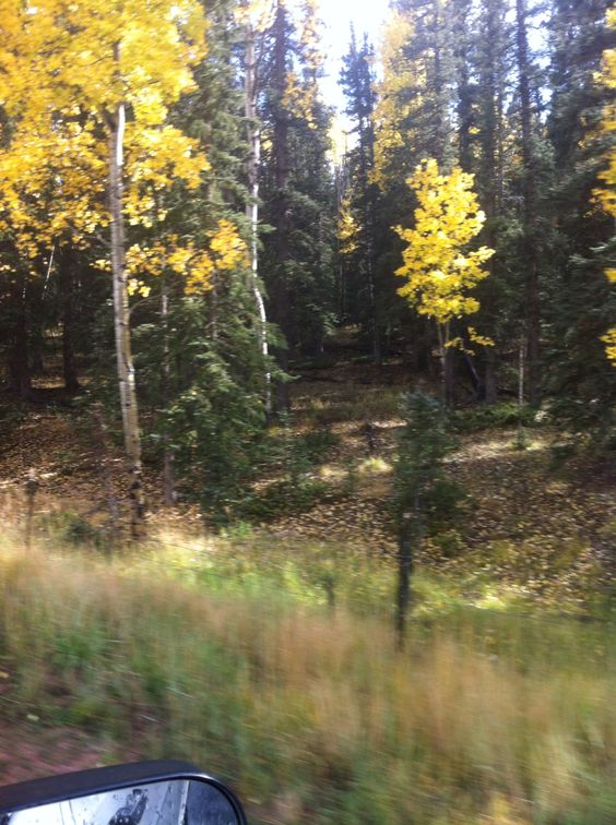 #Colorado Gold!
