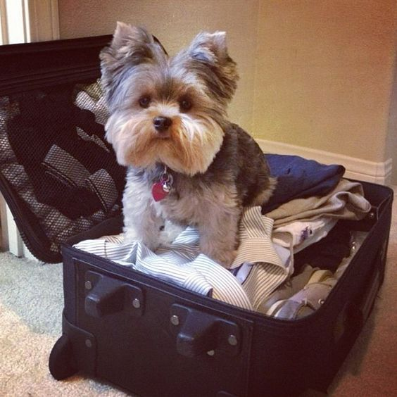 Pebbles trying to be a stowaway.