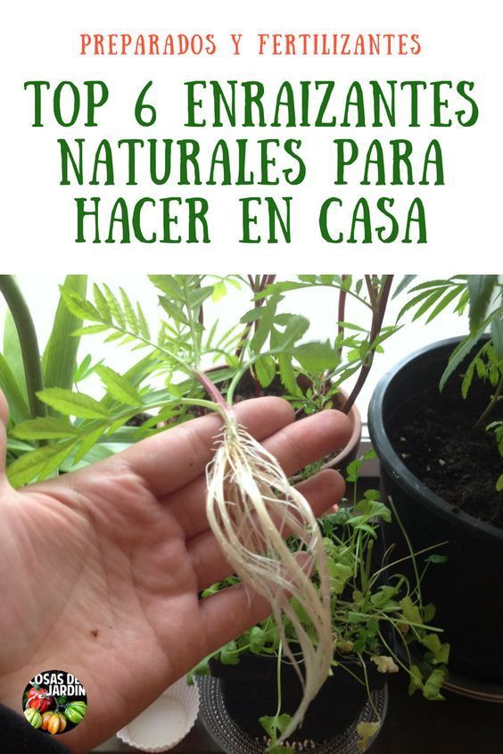 Top 6 Enraizantes Naturales Del Más Sencillo Al Más Complejo Enraizante Natural Fertilizante Para Plantas Abonos Para Plantas