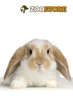 Dieses süße Kaninchen wartet ganz geduldig auf Ostern. Da