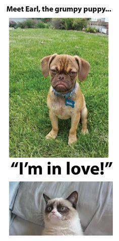 grumpy dog earl - Google Search