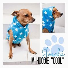 photokraphy: *Free-Book* Hundehoodie (at the end of the page free pdf pattern) - deutsche Anleitung