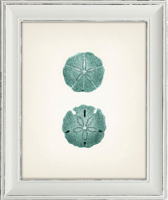 Blue sand dollar illustration - photo#1