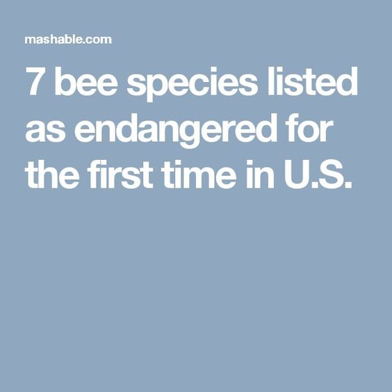 7 bee species listed as endangered for the first time in U.S.