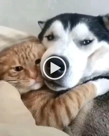 Gato não resiste o leitinho da cachorra
