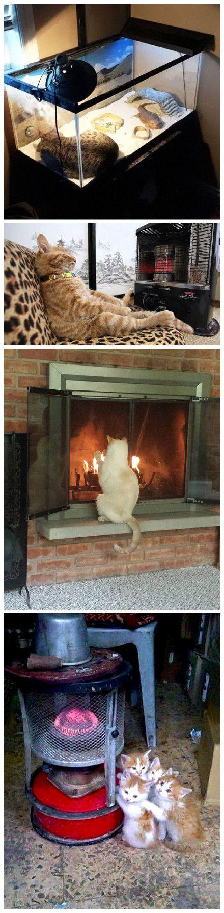 Cats need warmth - Album on Imgur