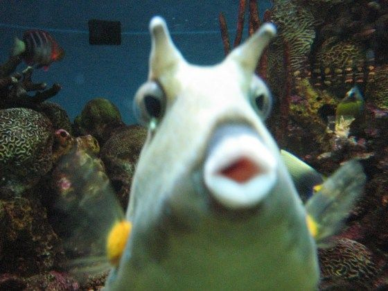 Funny animals and photos on pinterest for Funny fish pictures