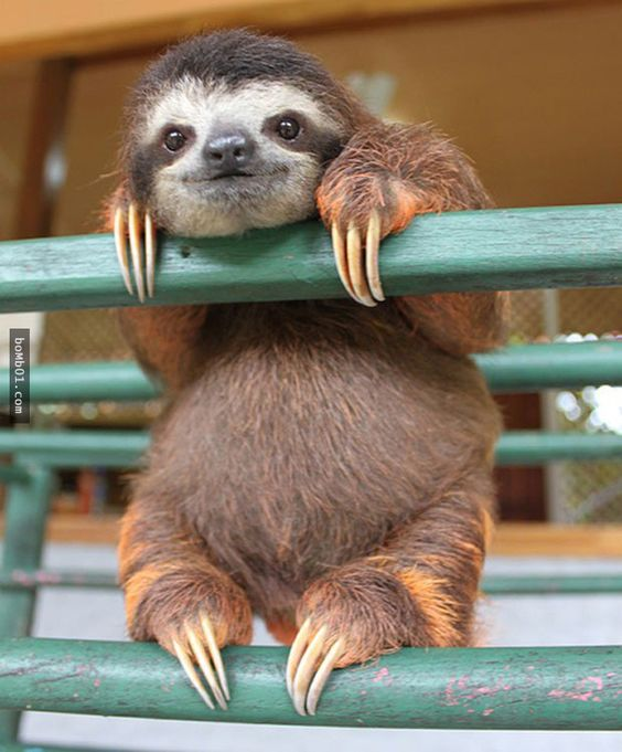 這27隻動物有特別的技能,就是牠們懂得在鏡頭前擺出最有自信的一面。 - boMb01