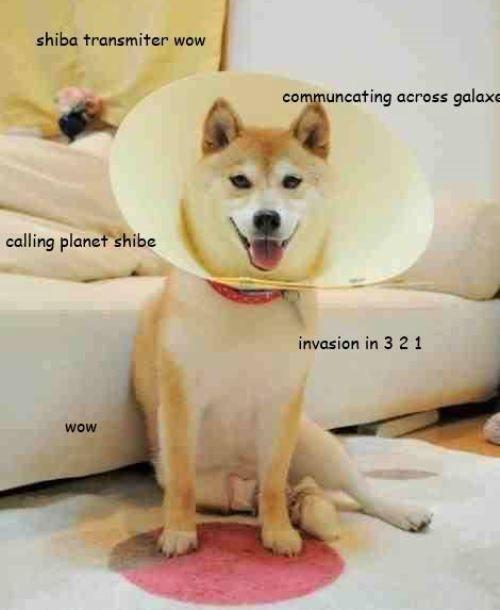 Shiba Inu Meme Doge Communication Station Corgis