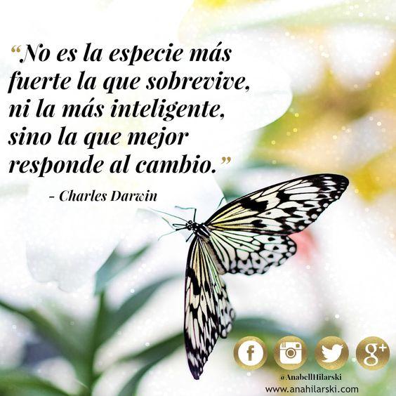 Como Mariposas 1a339ec869f90b19250bf128176a0ab3