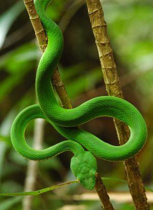 Rainforest Animals | Rainforest Snakes And Snakes' Unique ...