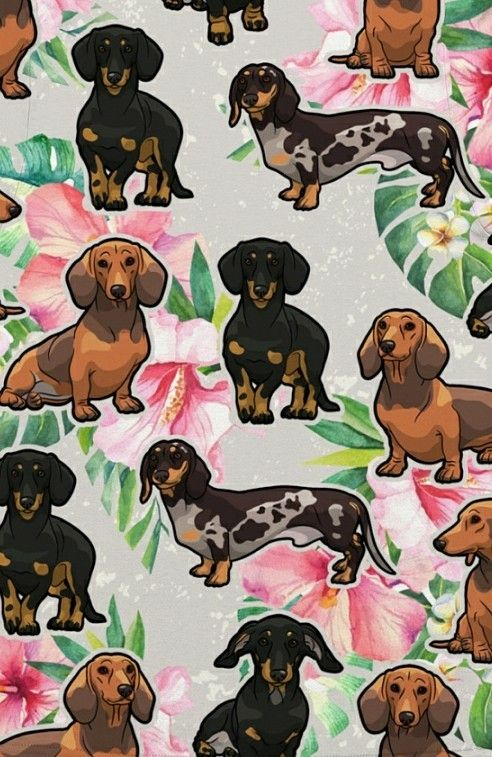 Dachshund Dachshund Art Spaniel Art Dog Wallpaper