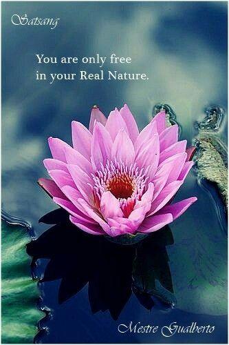 Você só é livre em sua Real Natureza. Satsang Mestre Gualberto. @marcosgualberto