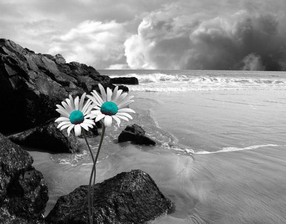 Black white teal wall art coastal beach by for Color splash wall art