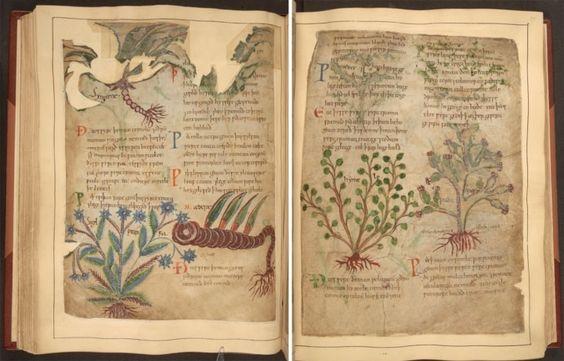 Manuscrito medieval de remedios herbolarios disponible en línea