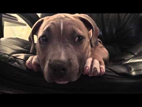 Man Talks Barking Puppy To Sleep In One Minute Youtube Puppies Kittens Cutest Cat Day