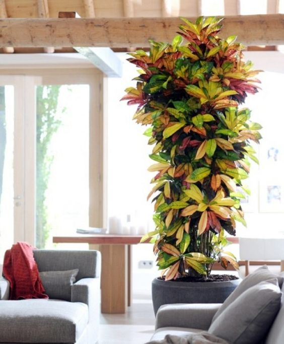 Popuar Tall Indoor Plants Plants Pinterest