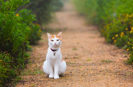 7 Common Gi Problems In Cats Cat Love Pets Cat Health