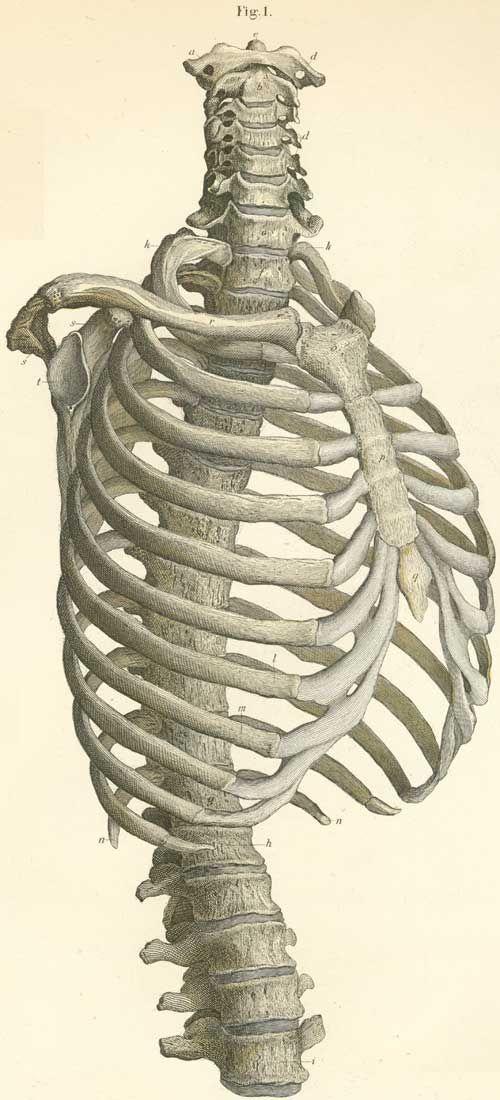 موسوعة و اطلس تشريح جسم الانسان  Beautiful medical anatomy reference drawings -  منتديات عجور