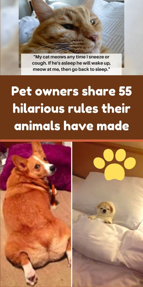 Pet Owners Share 55 Hilarious Rules Their Animals Have Implemented In The Household In 2020 Baby Animals Funny Pet Owners Hilarious