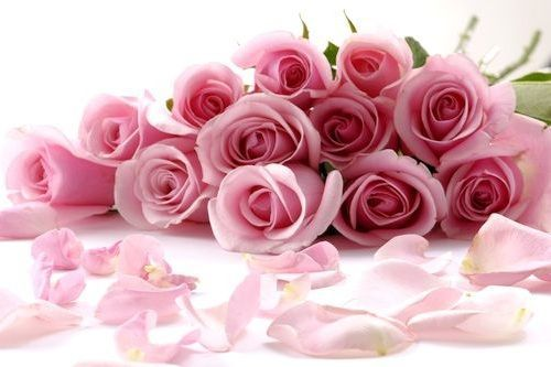 Pink Rose Flowers Pictures Purple Roses Red Roses White Roses Yellow Roses Yellow Roses Rose Flower Wallpaper Cute Flower Wallpapers Flower Wallpaper