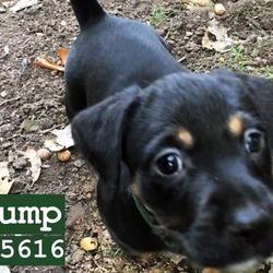 Austin Animal Center In Austin Texas In 2020 Dog Adoption Animals