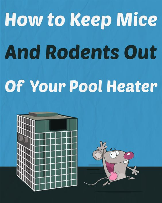 How To Keep Mice And Rodents Out Of Your Pool Heater Swimming Pool Care Pinterest Kolam