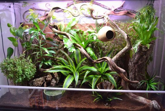 My crested gecko vivarium 2013 (Xepera, Finland)