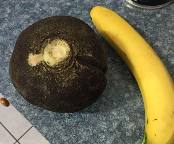 CSAs sometimes yield unusual produce varieties. Radish with banana for scale...