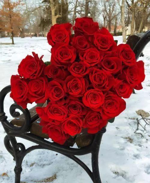 Epingle Par Sohila Mai Sur Belles Roses Belle Rose Jardin Rose