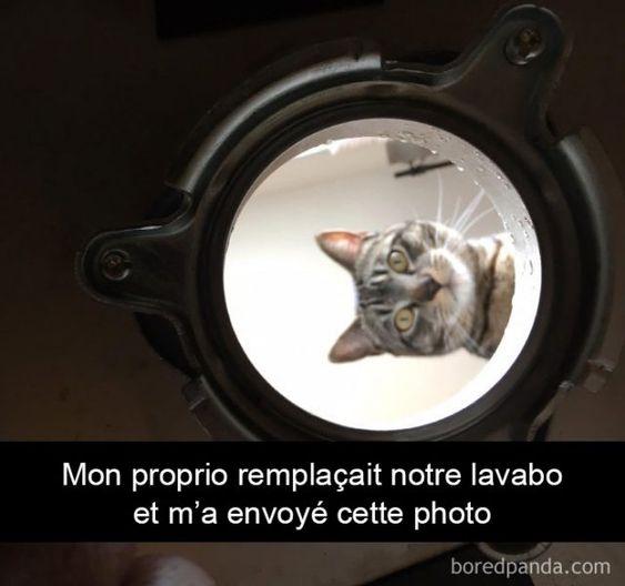 23 photos légendées de chats qui vous feront passer du rire aux larmes (page 2)