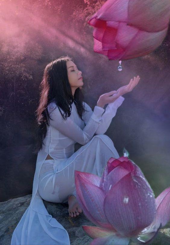 Pink lotus drop