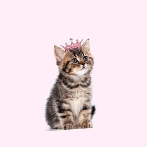 Pink Vomit Cat No Food