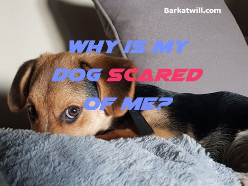Why Is My Dog Scared Of Me Dogs Dogs Trust Dog Health