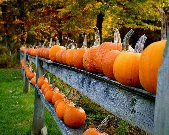Pumpkins, glorious pumpkins!
