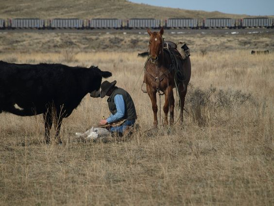 Yoyo - Red Roan Ranch Gelding for Sale - For more information click on the image or see ad # 33729 on www.RanchWorldAds.com