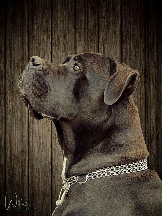 30 Of The Best Lab Mix Labrador Mix V 2020 G Kane Korso